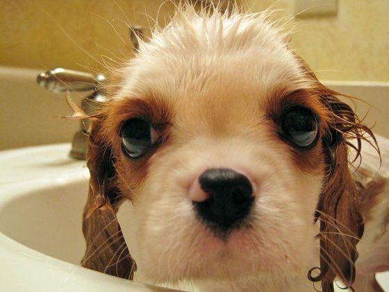 splish splash puppy taking a bath
