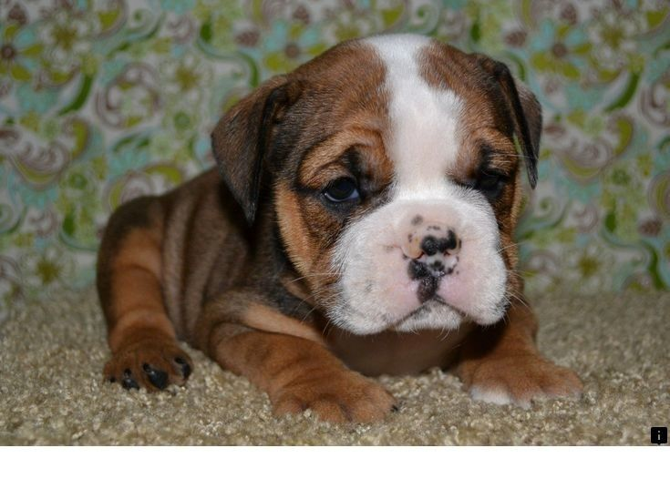 Check Out The Link To Find Out More Free Puppies Just Click On