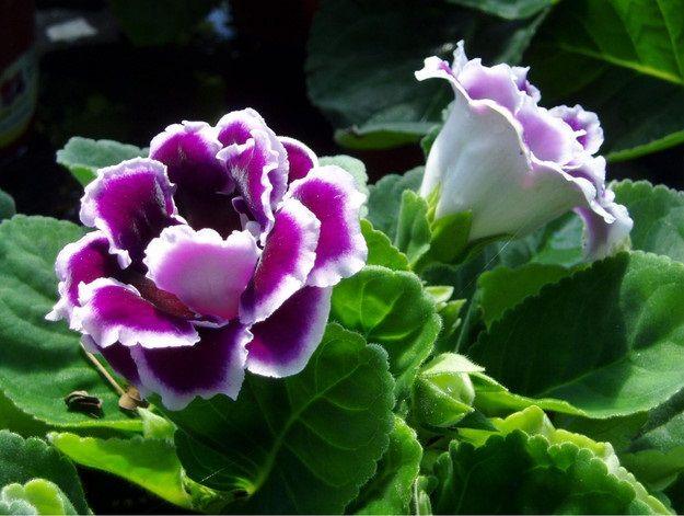 Glossina: Amore a prima vista. #fiori #glossina #flower #wedding #matrimonio