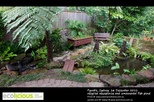 Aquaponics landscaping better homes and gardens for Garden pool aquaponics