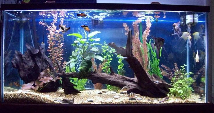 The 25 best fish tank themes ideas on pinterest for Good aquarium fish