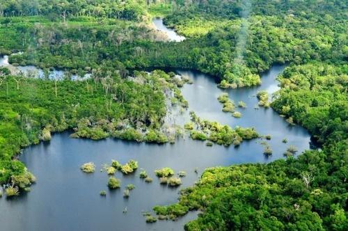 アマゾンの熱帯雨林 - ブラジル&南米諸国