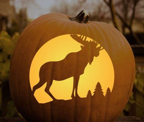 Best images about halloween jack o lanterns on