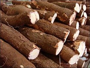 tubercules-de-manioc-1.jpg. Cassava