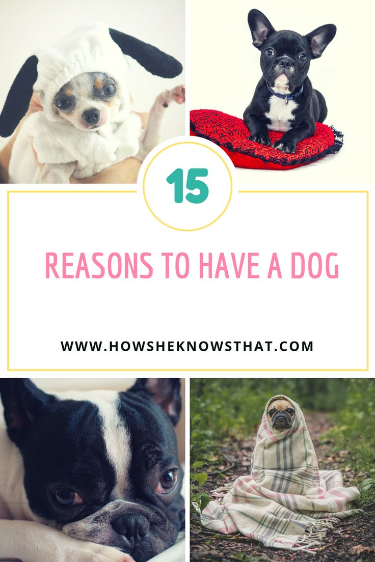 Dogs are the most special living beings that we love so much. Happily, more legal measures are taken to ensure that animals are respected...