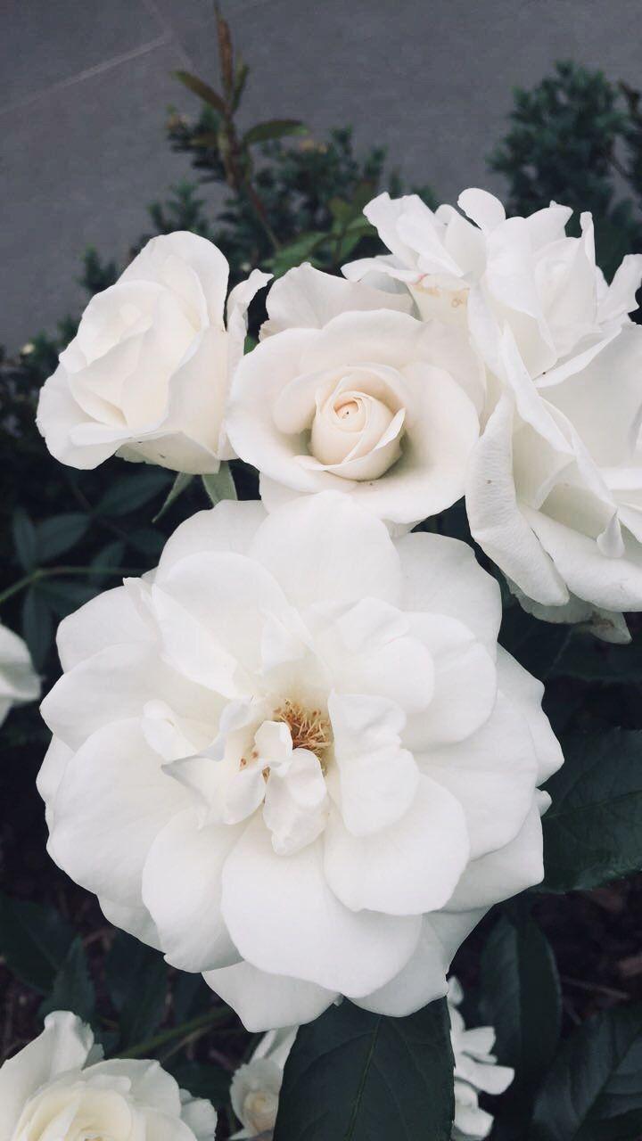 Pin By Hkdfksdhfheknjwj Fencdusdfn On Aes P R I S M Flower Aesthetic Flower Prints Art Aesthetic Roses