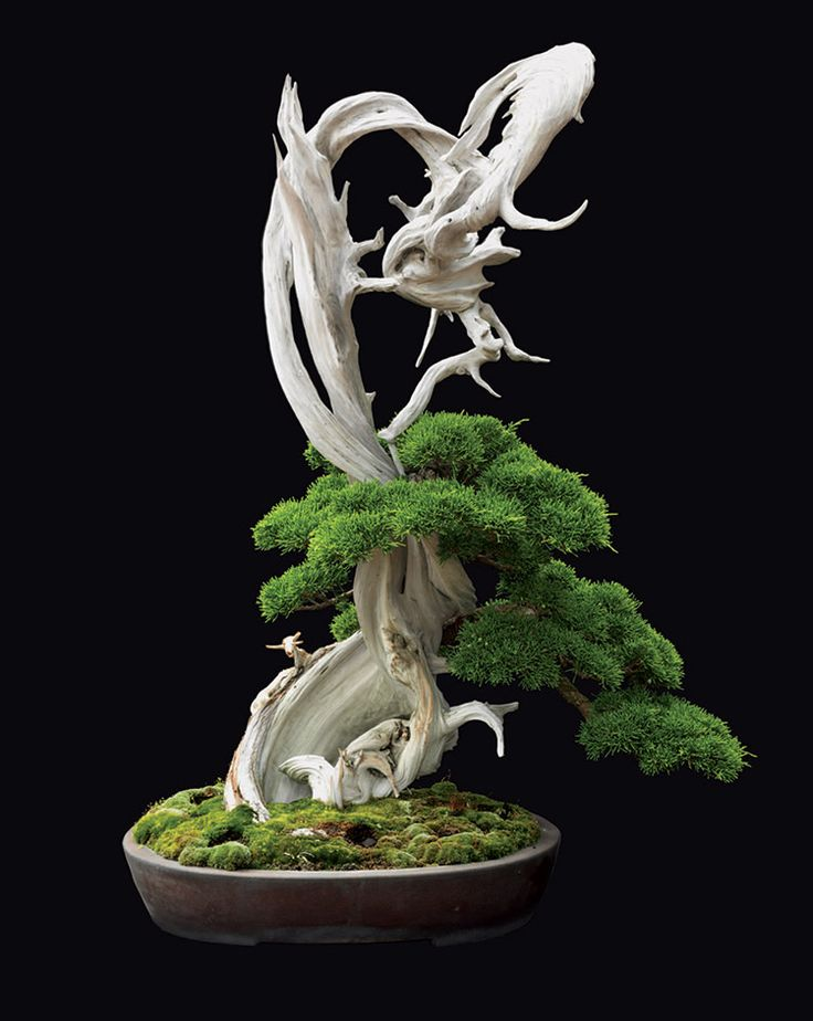 Fine Bonsai   Art And Nature