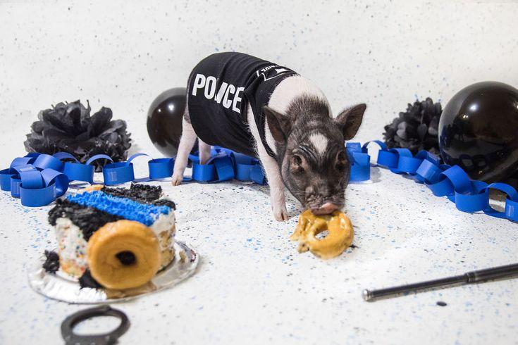 А вы представляете себе полицейского-свинью??? — Smehu.com