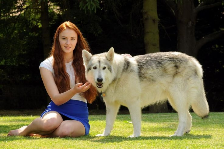 The actress who plays Sansa Stark adopted her 'dire wolf' from the show in real life!