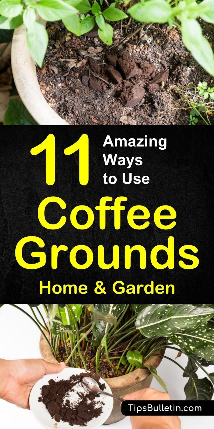 11 Ways to use coffee grounds in the garden including as fertilizer and for pest control. Coffee grounds work wonder if mixed with egg shells, especially on vegetables like tomatoes but also on plants like roses or hydrangeas.#fertilizer #coffee #coffeegrounds