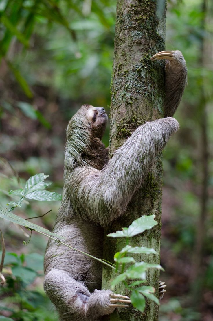 Download the perfect sloth pictures. Find over 17 of the best free sloth images. Free for commercial use ✓ No attribution required ✓ Copyright-free ✓