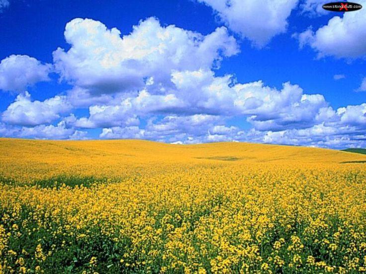 Paesaggi20  - Prato fiorito di campagna