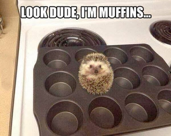 Funny animal picture of cute baby hedgehog in biscuit tray.