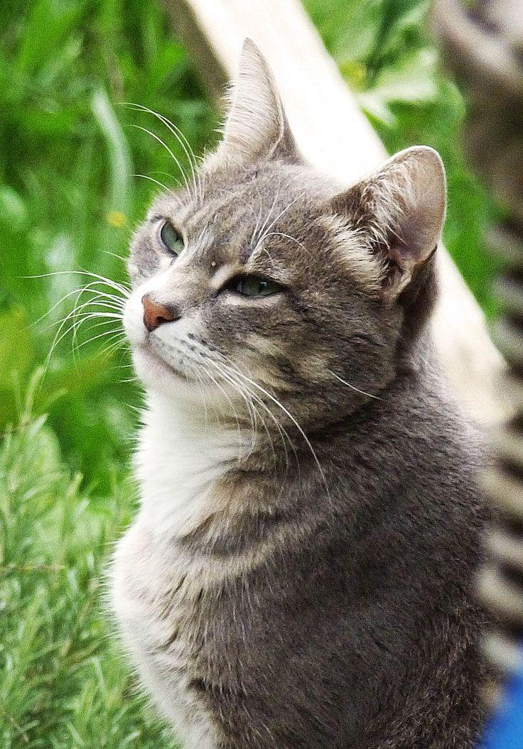 cat - Grigina
