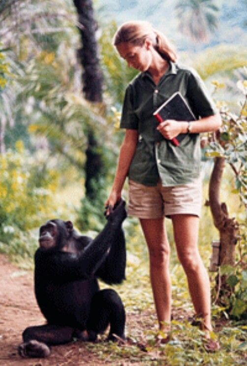 Jane Goodall                                                                                                                                                                                 More
