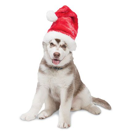Holiday Headwear - Dog Santa Hat