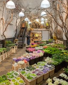 NY City flower market, beautiful blooms.