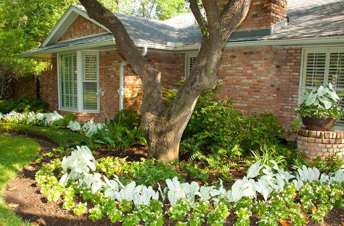 dallas area backyard design Landscape Design and Installation