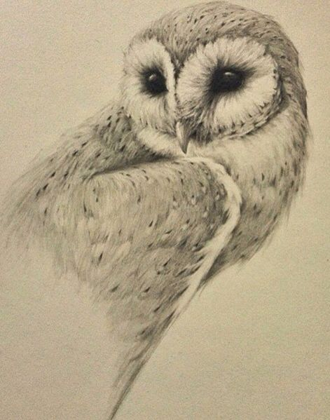 Owl 57 3042 best images about...