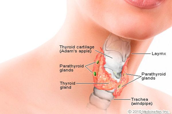 Disorders of menstruation and fertility problems – painful and heavy menstrual periods are often associated with hypothyroidism. >>> Read more by visiting the link on the image.
