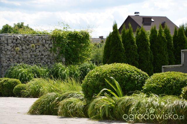 Ogród tworzę nowoczesny czyli wewnętrzna walka jak nie zostać kokoszką :) - strona 2380 - Forum ogrodnicze - Ogrodowisko