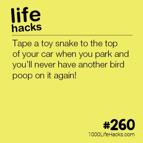 The post #260 – Never Get Bird Poop On Your Car Again appeared first on 1000 L...