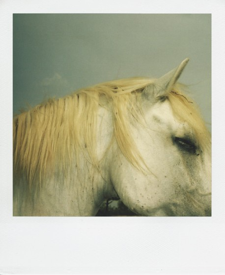 Beautiful Polaroid image. I would love to do pet photography with a polaroid.