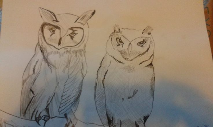 sketch of owls