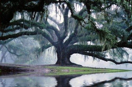 """""""Mientras avanzaban, el camino se estrechó y empinó; al cabo de unos minutos, 66 llegaron a la cima de la colina y, por un momento, Laurel creyó que le pasaba algo en los ojos. Un enorme árbol con unas anchas ramas muy extendidas daba sombra a toda la cima."""" -Aprilynne Pike en Hechizos"""