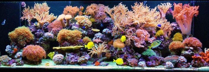 Top ten tanks AZReef's Reef Tanks Photo (ID 36556) - Full Version | RateMyFishTank.com