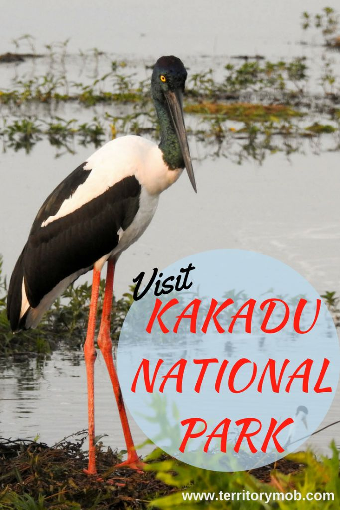 Escape to Kakadu - steeped in Aboriginal Culture — Territory Mob