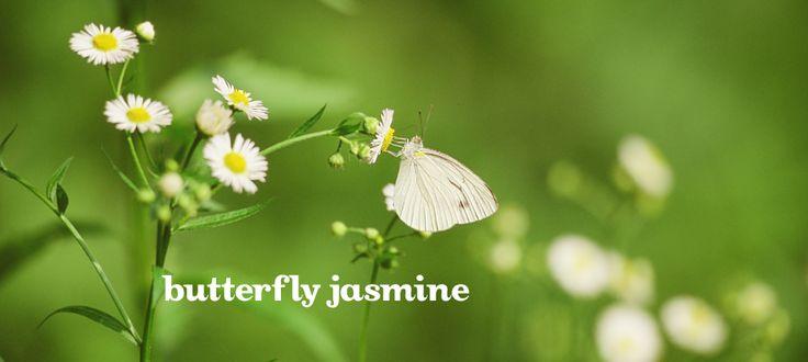 Butterfly Jasmine by DavidsTea