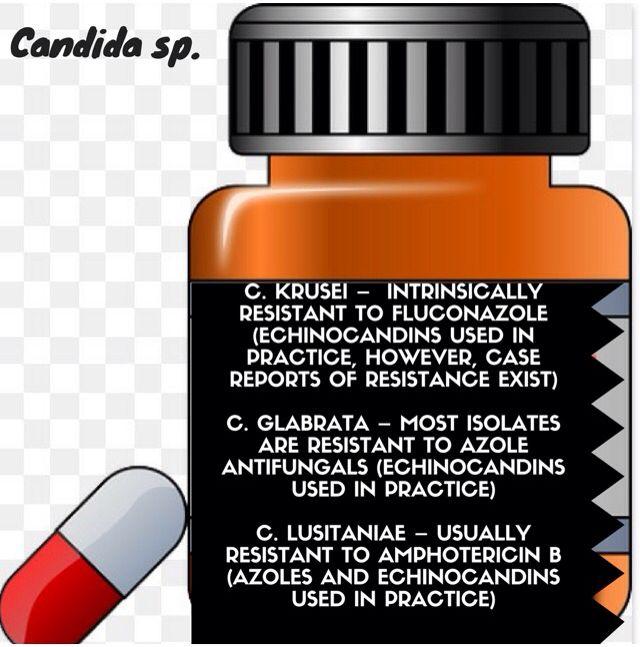 CANDIDA SP.#candida #albicans #antifungal #echinocandins #fluconazole #IDSA #Guidelines #pharmacylife #pharmacyprobs #pharmacystudent #pharmacyschool #pharmacology #futurepharmacist #pharmacist #pharmacists #pharmacisttobe #futurenurse #futuredoctor #doc #pharmacy #pharmacylife #pharmacylife💊 #student #PA #NP #rpa #fnp #doctor #futuredoc #physician #internist #hospitalist #hospital #pharm #rn #md #do #rph #pharmacygal #:)