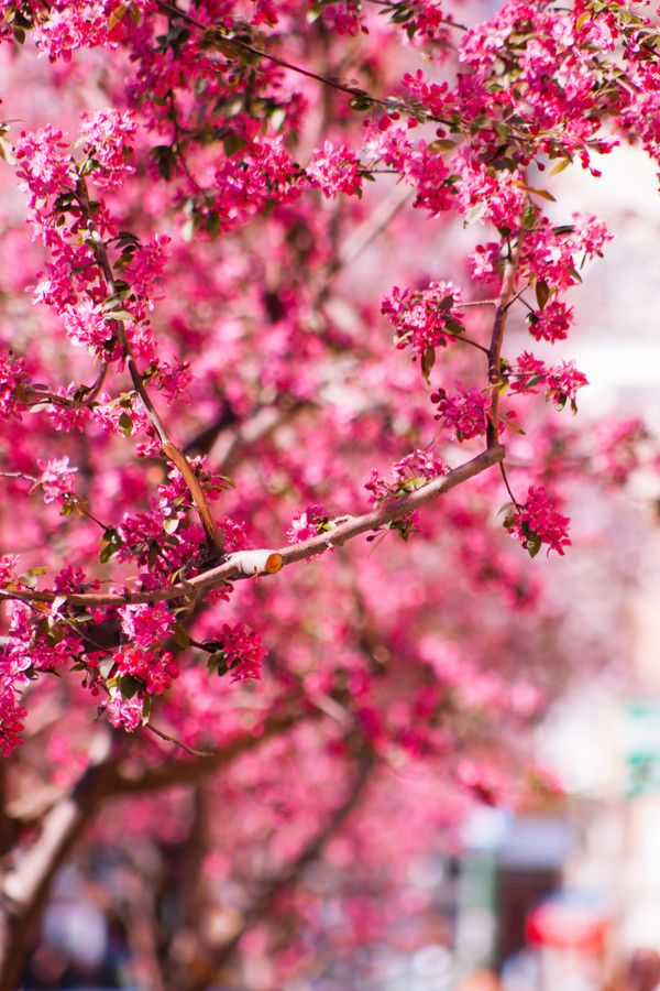 Spring melody by Petru Cojocaru on 500px