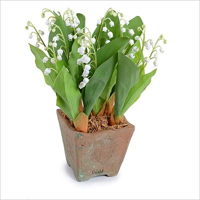 Lily of the Valley: A world-wide sign of Spring, the Lily of the Valley is a joy to display. When live plants are not in season, our reproduction pot of 7 pips is a perfect substitution. The tiny white bell-shaped flowers on delicate stems rise from light to darker green leaves, planted in a 4