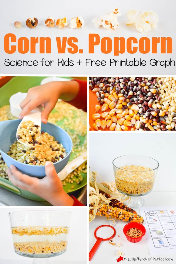 Corn vs. Popcorn Science for Kids and Printable Graph | A Little Pinch of Perfect