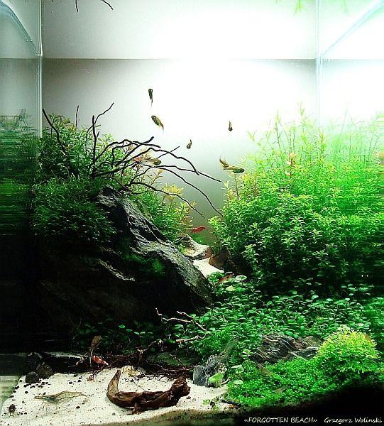 199 Best Aquascapes Images On Pinterest