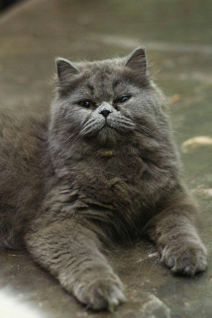 Kucingku Kucing Pinterest
