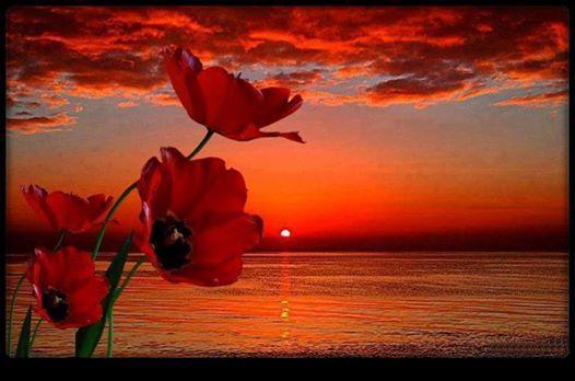 """""""Tramonto: appassionato bacio tra il sole e l'orizzonte""""  - ©Riflessi d'acqua -  *Immagine reperita nel Web  Riflessi d'acqua-diventa fan"""