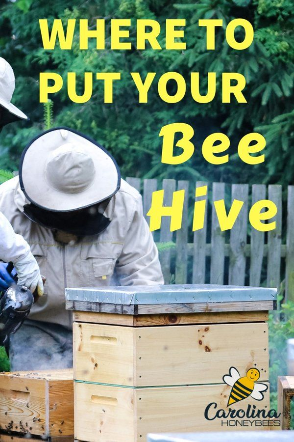 where to put your beehive and have no regrets best of carolina rh pinterest com how to get bees in your yard how to get rid of bees in your backyard
