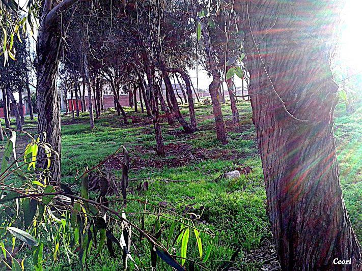 Mi bosque encantado