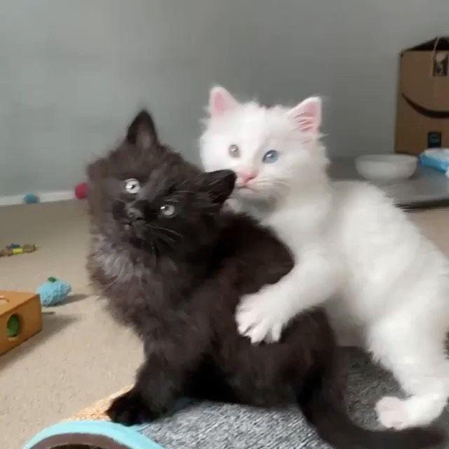Cats Of Instagram On Instagram From Kittenhotel While I