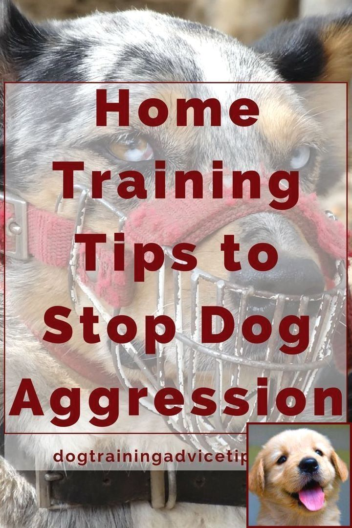 House Training Your Puppy Using Crate Kennel Method And Dog