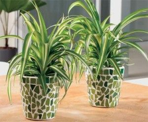 43 best lazure painting techniques images on pinterest for Easy houseplants safe for pets