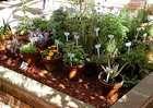 http://www.countryfarm-lifestyles.com/companion-planting.html