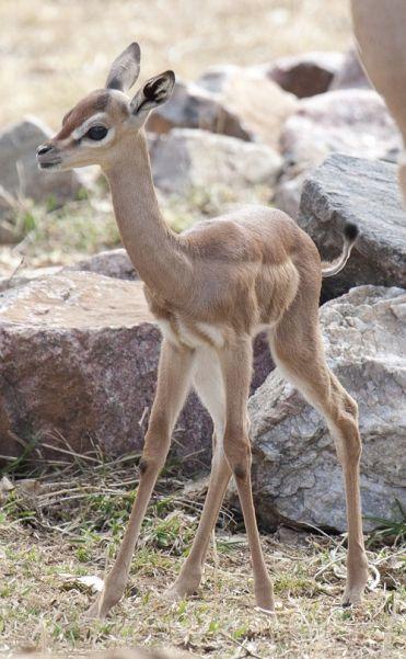 Детеныши редких животных — National Geographic Россия