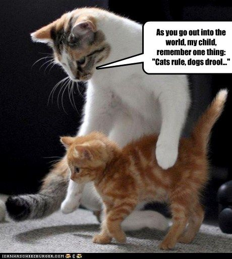 The team at icanhascheezburger.com always has just the right material when I'm looking for cat humor pictures to post.  This time, the elder cat is talking.