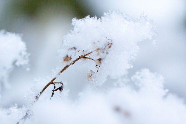 Januári teendők a kertben. Fontos információk, melyeket a #kertészkedésnél figyelembe kell venni #télen és tavasszal