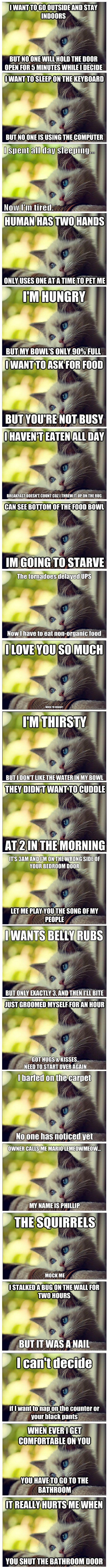 LOL! Cat problems...