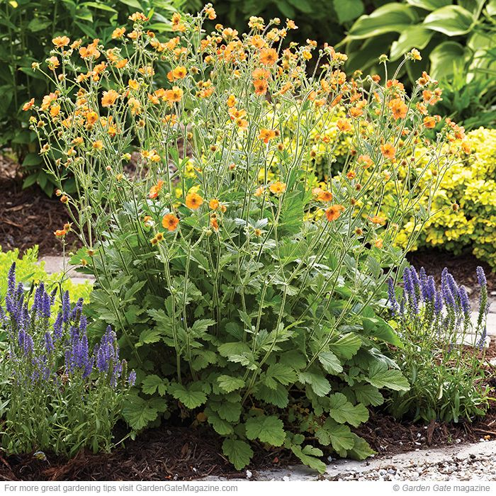 167 best Garden Design Ideas images on Pinterest Garden gate
